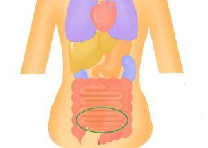 小腸から分泌されるホルモンにはダイエットの秘密が!