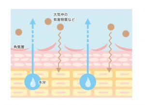 乾燥肌のメカニズム(断面図)