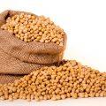 畑のタンパク質「大豆」