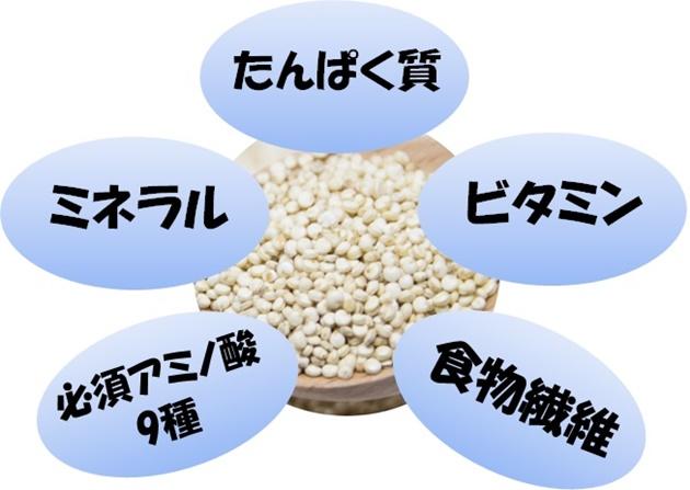 キヌアの持つ注目の栄養素