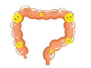 大腸の善玉菌