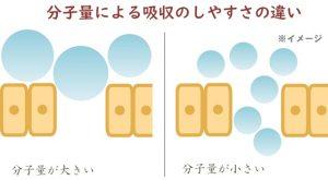 分子量による吸収効率の違いのイメージ